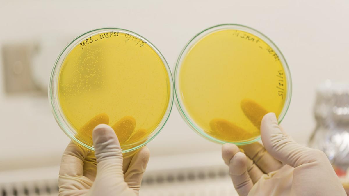 Slik kan legionellabakterien lure oss