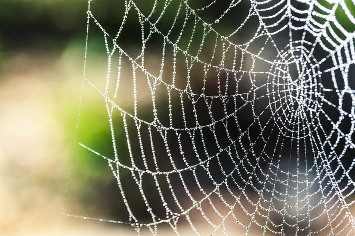 spider-nett.jpg