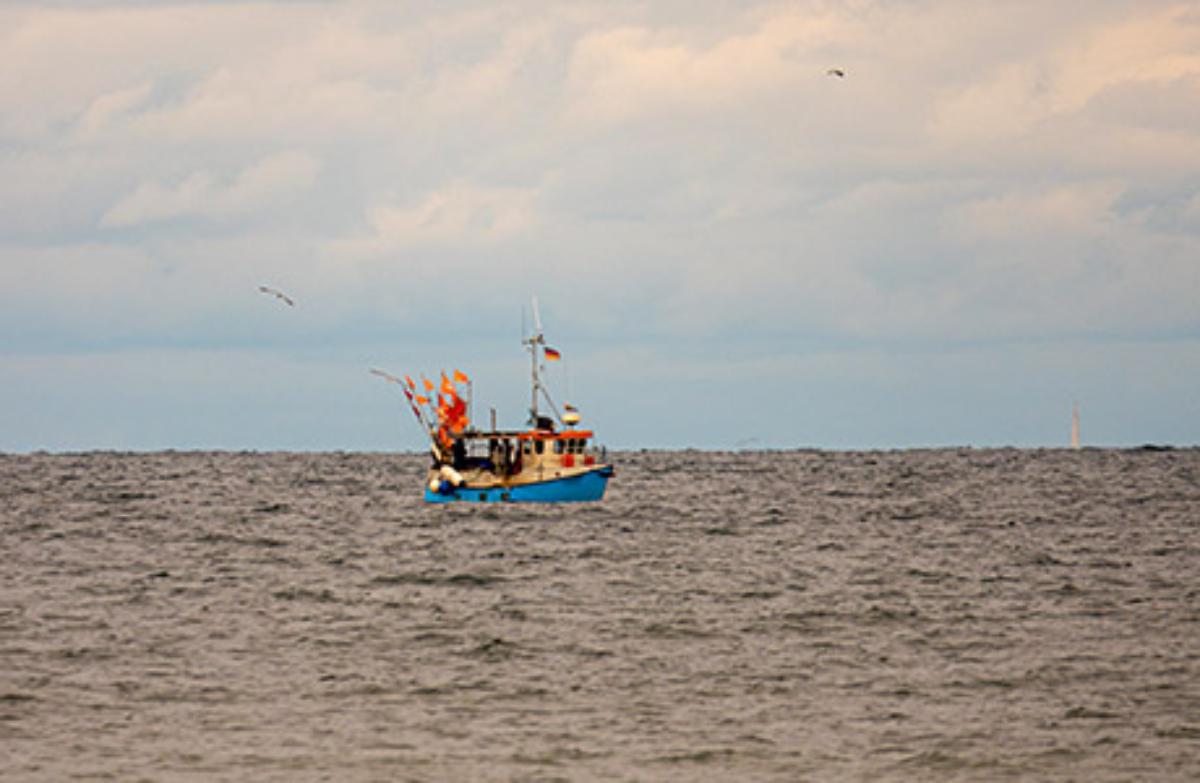 Fish oil Peru